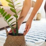 29 Houseplants for Low Light Areas