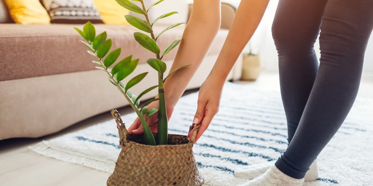 Best Houseplants for Low Light | The Leafy Little Home