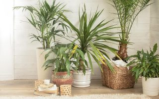 Create a Boho Aesthetic With Houseplants