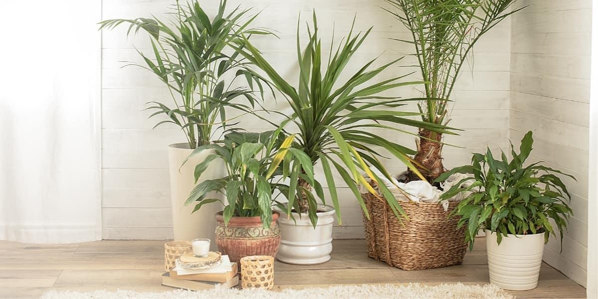 Create a Boho Aesthetic With Houseplants