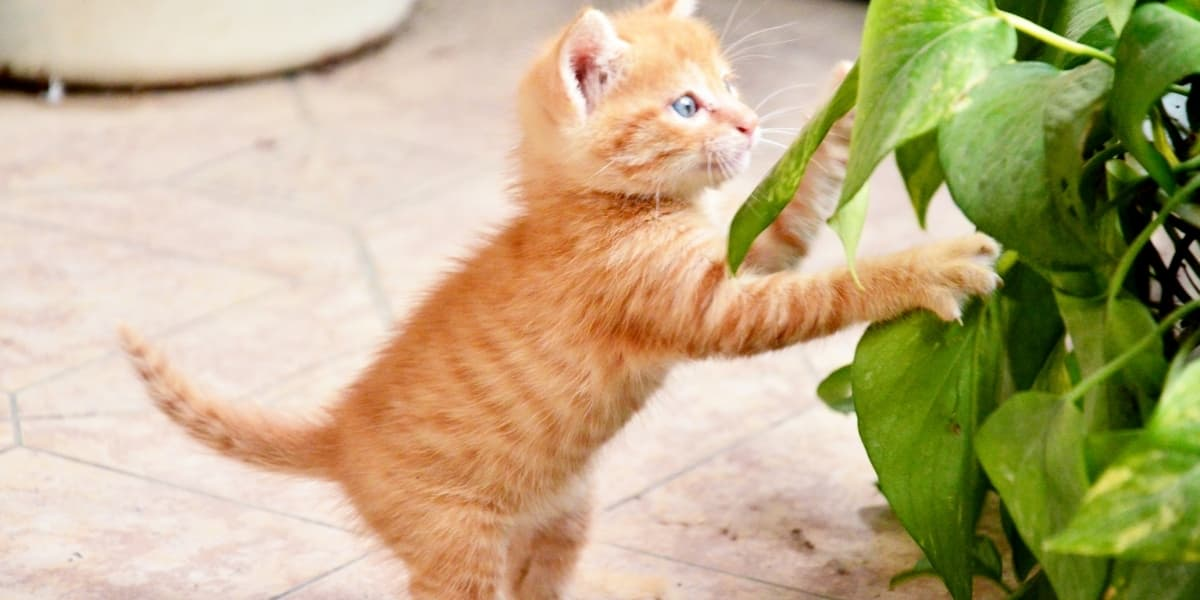 kitten pawing at houseplants