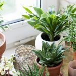 11 Easy Houseplants for Beginners