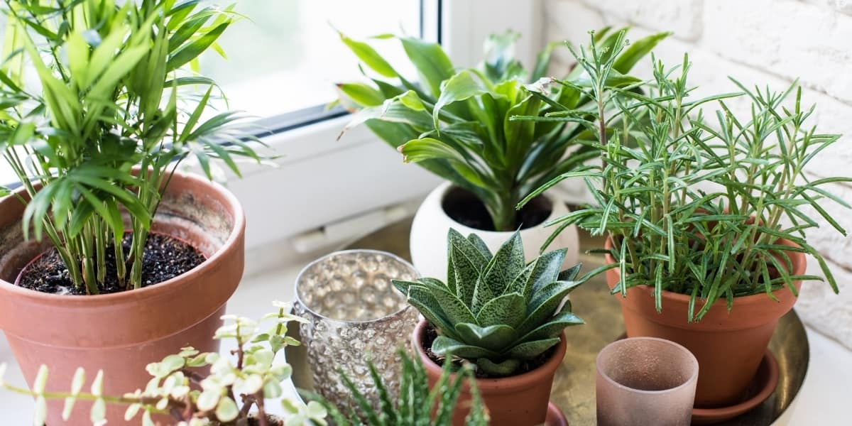 Easy Houseplants for Beginners | The Leafy Little Home