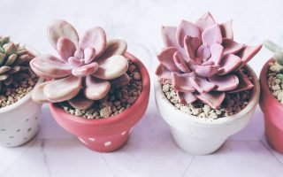 How to Water Succulents in Containers