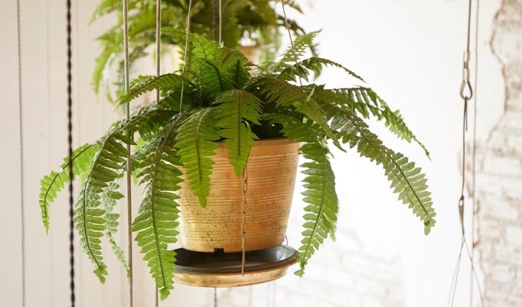 fern in a DIY indoor hanging planter
