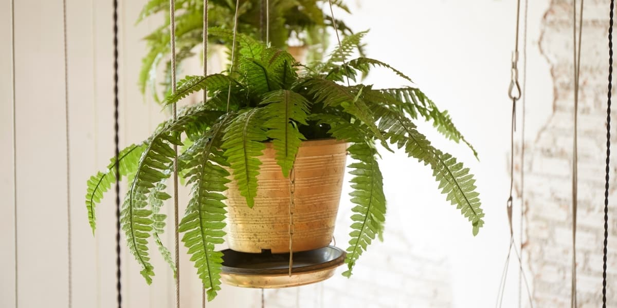 12 Diy Indoor Hanging Planters To Beautify Your Home The Leafy Little Home