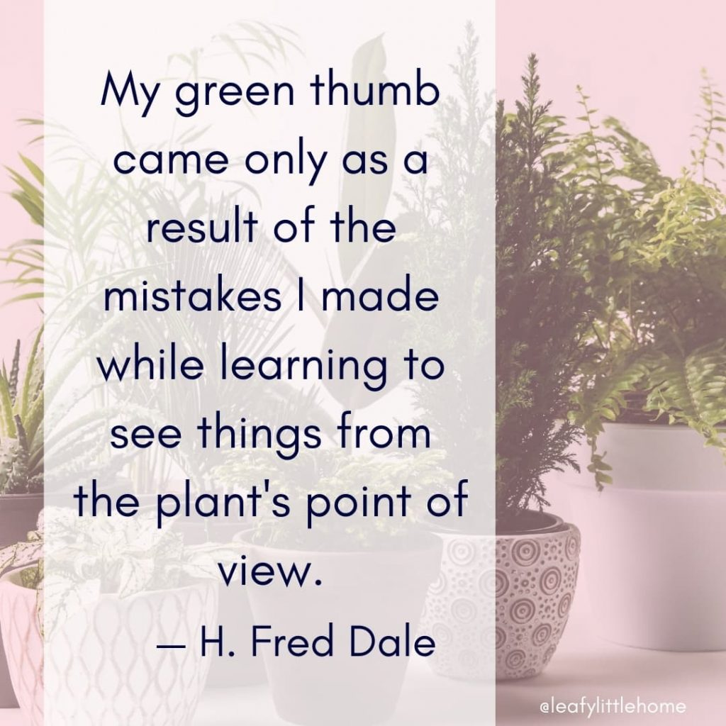 10 Inspirational Houseplant Quotes With Photos The Leafy Little Home