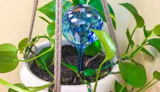 image of a watering globe in a plant showing Do Watering Globes Work to Water Your Houseplants